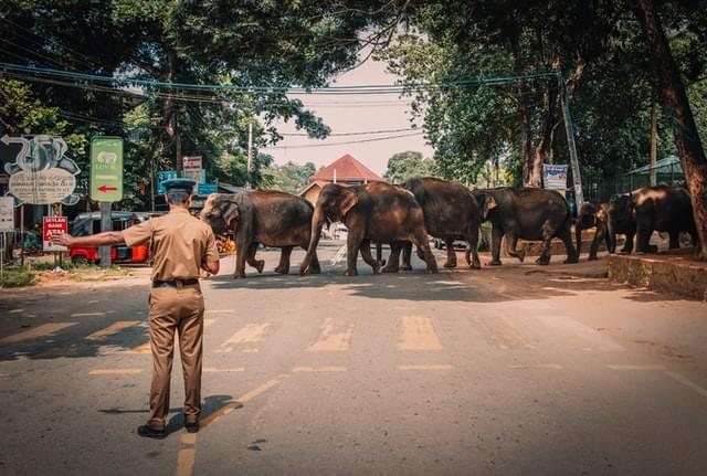 group of Elephants crossing across the street during daytime photo